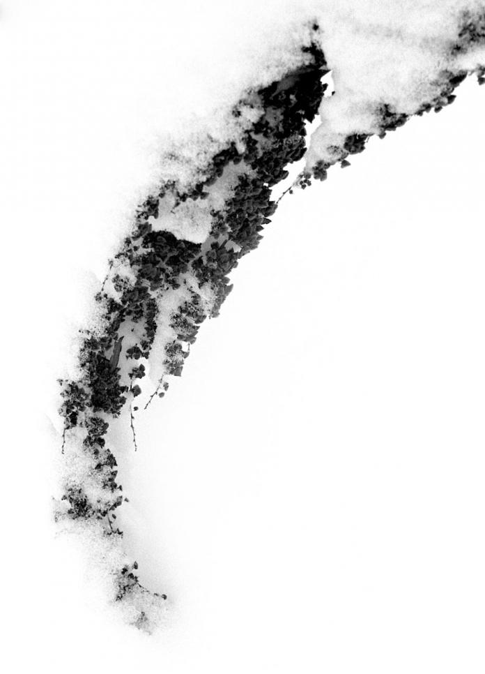 High contrast abstract scan photography. ; Lina Barengolts